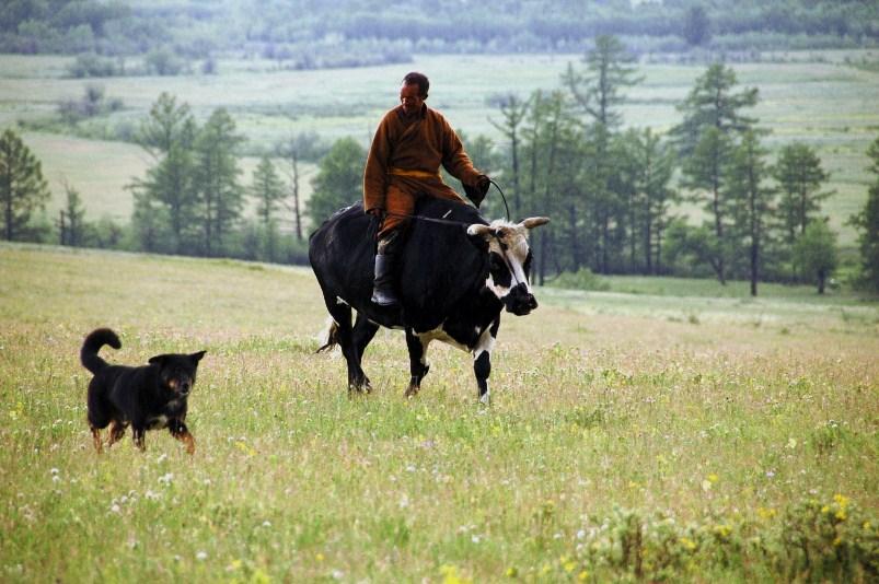 Farfar på oxen
