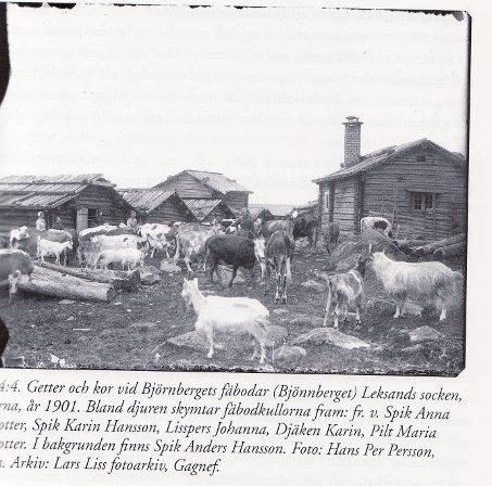Fäbod i Dalarna 1901