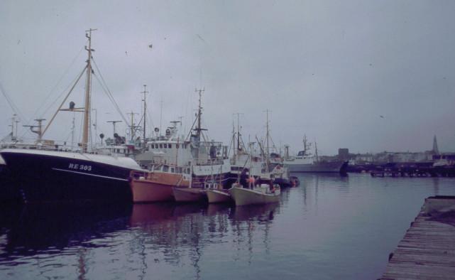 Fiskenäringen dominerar