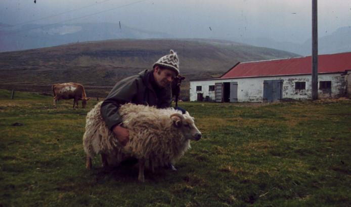 Arni visar lamm