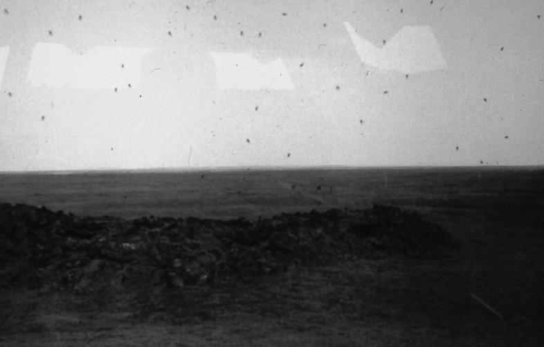 100-årig lavaström och mygg