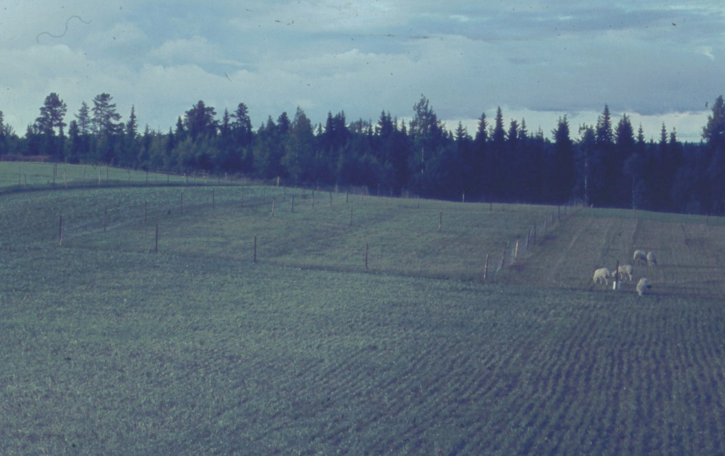Utsikt över första betesanläggningen 1964