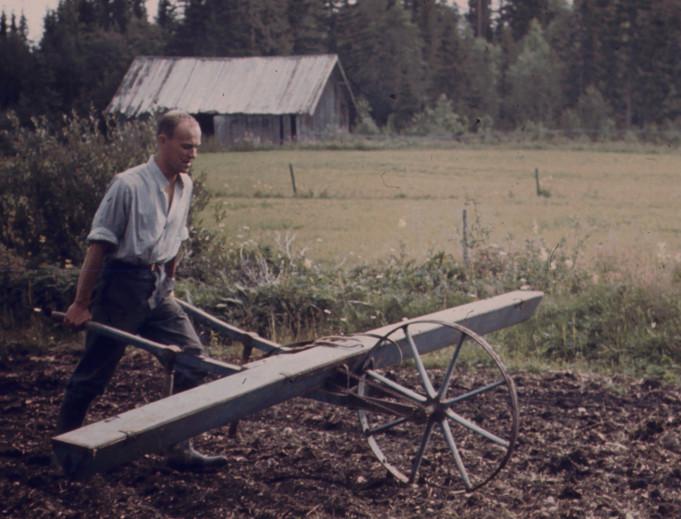 småfrösådd 1967
