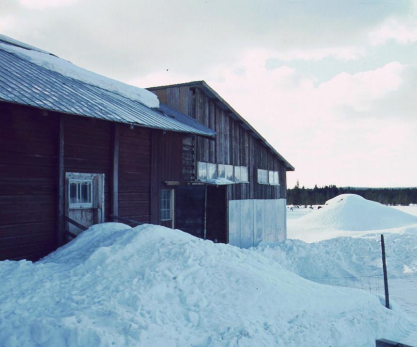 Första fårhusbygget 1972