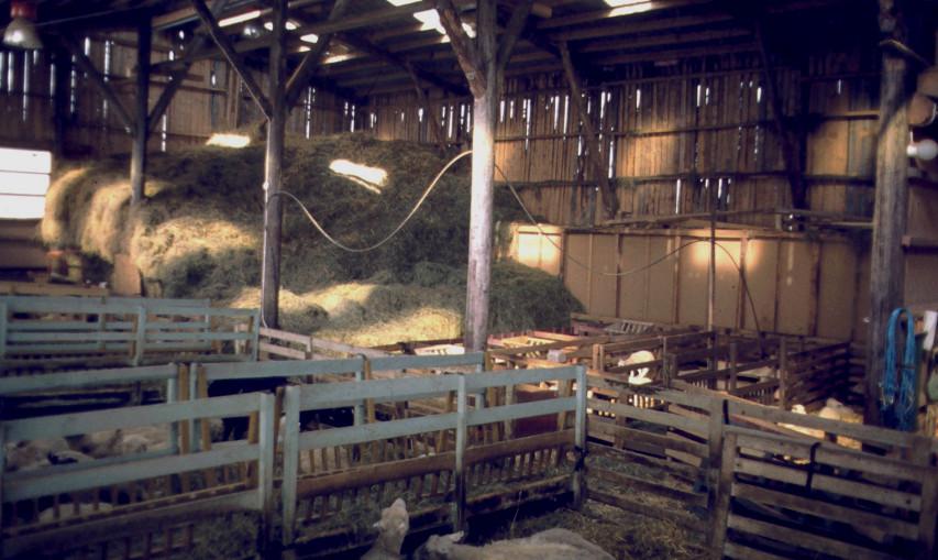 1982 lamningsavdelning