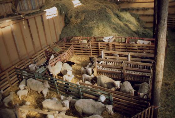 1983 gruppboxar o lammkammare