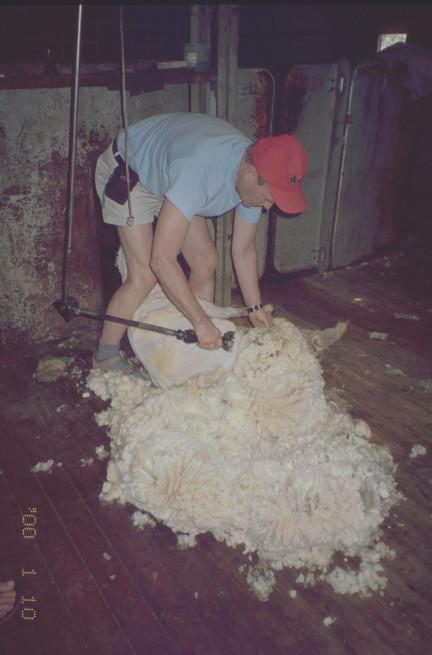 klippning på Kangaro Island år 2000