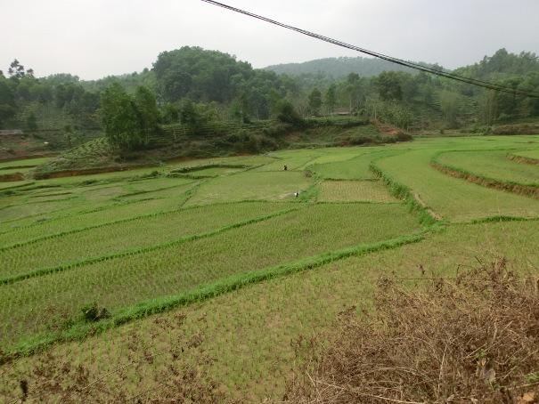 Terasser i Nordvietnam