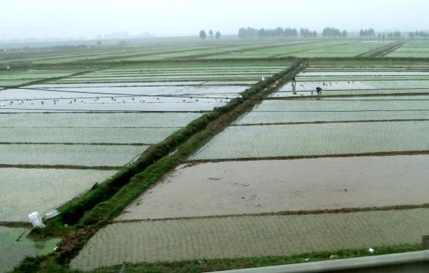 Risplantering vid Röda floden