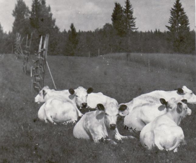 koflocken 1961