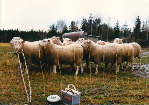 1989 Avelsbagglamm med elaggr. och vattentank