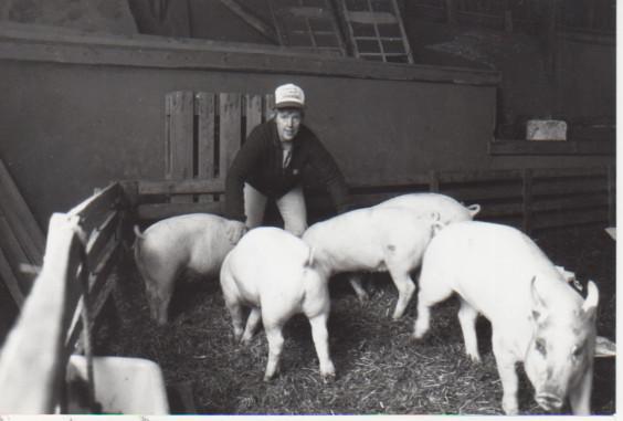 Grisar i fårhuset