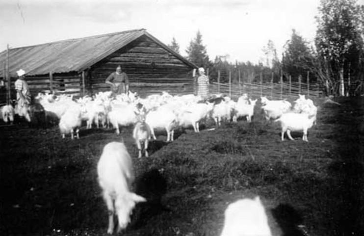 Skjörbuan år 1920