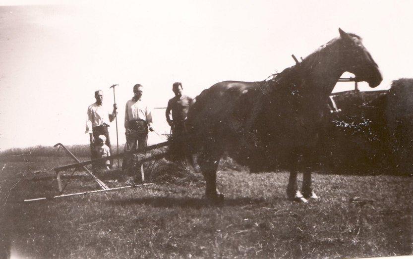 skörd 1945