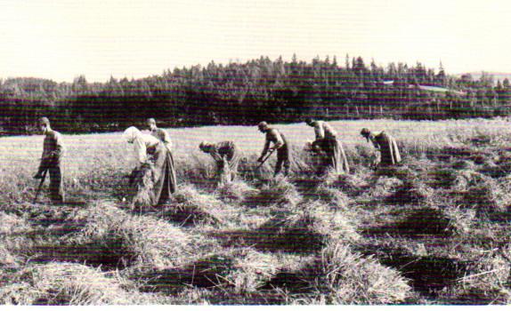 skörd Ög omkr 1890