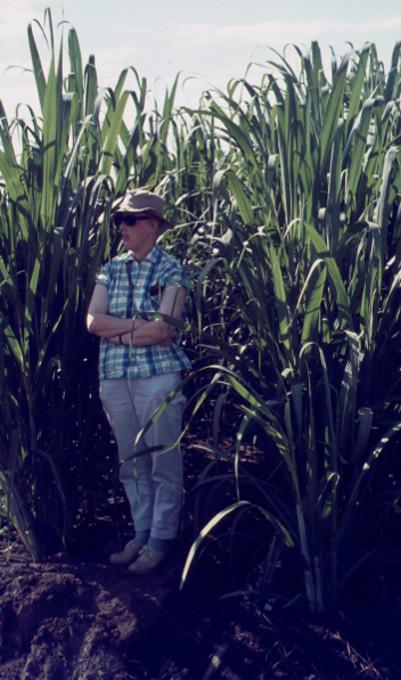 Sockerrör i Kahe, Moshi ger skugga åt Lena